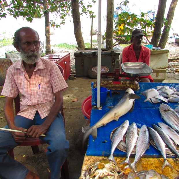 Fish Market, Fort Cochin, Kochi, Kerala, India