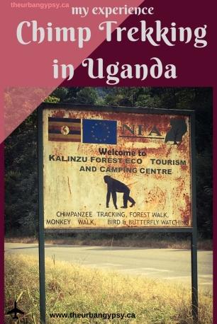Chimp Trekking - Uganda