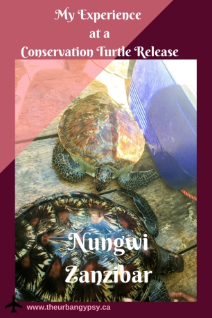 Copy of Nungwi Zanzibar Conservation Turtle Release